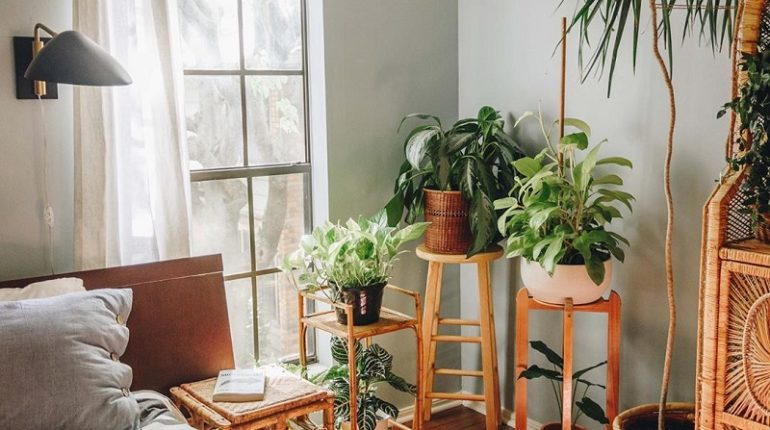 Best House Plants For Bedroom To Get Better Sleep