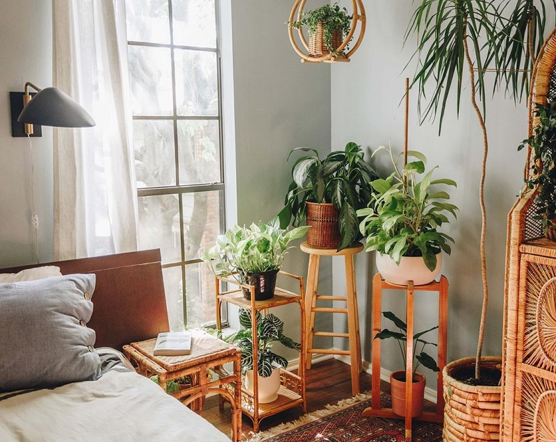 Best House Plants For Bedroom To Get Better Sleep
