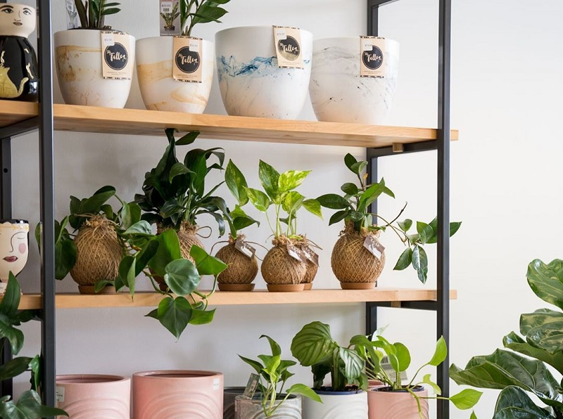 Best Houseplants To Get Greenness At Home