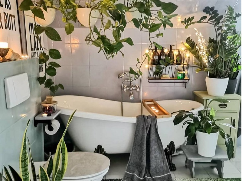 Best Air-Purifying Plants To Keep In Bathroom