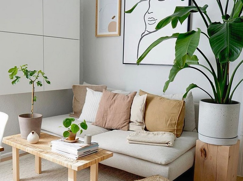 Dramatic Houseplants To Boost Tropical Look Of Home