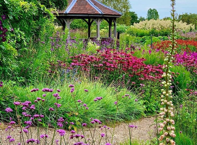 Best Flower Plants To Have In Autumn Garden