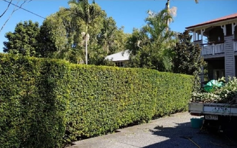 List Of Lush Green Plants For Creating Natural Fence