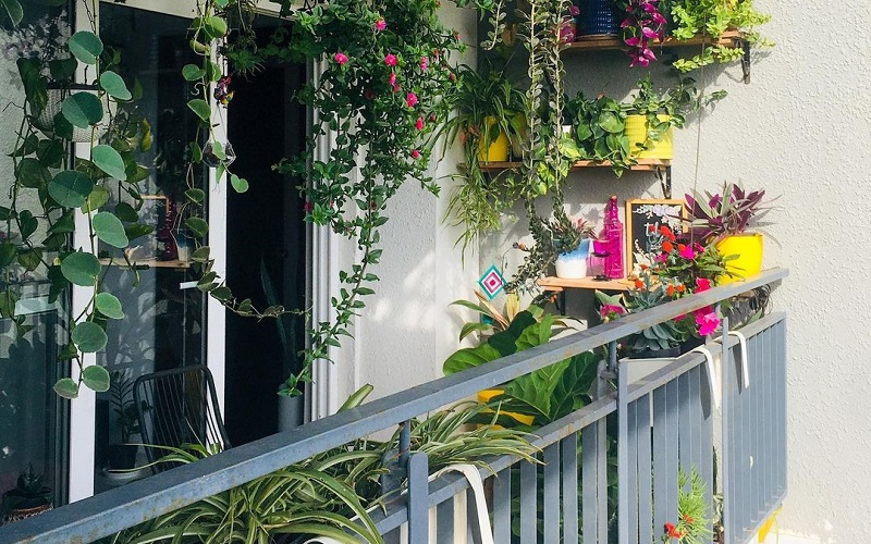 5 Best Plants To Grow In Balcony Garden